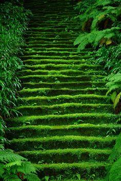 鎌倉妙法寺 Myoho-ji Temple, Kamakura, Japan #緑 #Green #Kamakura