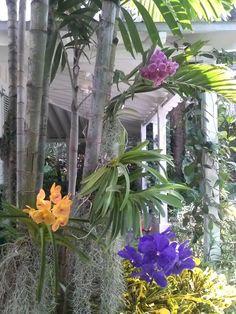 A #Key West orchid garden.