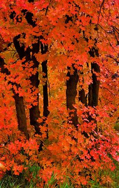 magnificent fall foliage