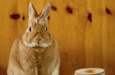 hipster bunny - Google Search
