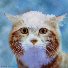 Snow Cat by Olga S. °