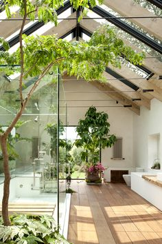 the next best thing to showering outside (maybe better) -- sun by peaked skylight wood beam and glass roof, a tree's branches overhead, and a 360º view