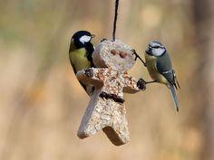 Lag meiseboller som gave! I Like Birds, Little Birds, Garden Animals, Creative Food, Bird Feeders, Dinner, Nature, Dutch, Clever