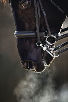Practices of an effective Dressage rider Beautiful Horse Pictures, Beautiful Horses, Animals Beautiful, Black Horses, Wild Horses, Dressage, Majestic Horse, All The Pretty Horses, Mundo Animal