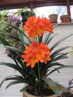 Wonderful Flowers, Beautiful Flowers, Raining Outside, Dogwood Trees, Garden Of Earthly Delights, Dry Garden, Spring Blooms, Orange Flowers, Garden Projects