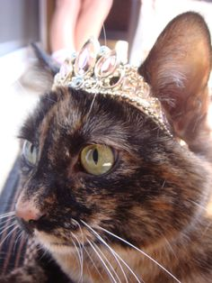 Princess cat....wearing an American Girl Doll crown. Tortoiseshell.