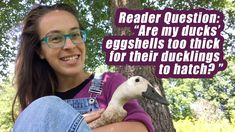 Ask the Duck Lady: Are my duck's eggshells too thick for ducklings to su... What To Feed Ducks, Keeping Ducks, Backyard Ducks, Raising Ducks, Duck House, Duck Eggs, Nesting Boxes, Egg Shells, The Creator