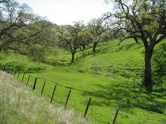 San Benito County back roads, simply beautiful!