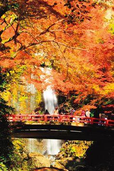 近場にこんなにもあるって知ってた?大阪・兵庫の紅葉名所7選 Fall Season, Osaka, Japan, Seasons, Nature, Photography, Painting, Beautiful, Autumn