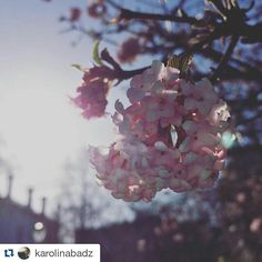 #Repost @karolinabadz with @repostapp・・・Another glorious day  cherry blossom at @trinitycollegedublin #tcddublin #trinitycollege #trinitycollegedublin #springindublin #springintrinity #springinireland #cherry #cherryblossom #spring #sunshine #flowers #tree #dublin #ireland #pantone #colours #rosequartz #serenity