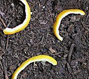 nine jardiniers sur 10 ne connaissent pas ces astuces Terrace Garden, Garden Plants, Garden Online, Growing Greens, Permaculture Design, Green Tips, Plant Cuttings, Home Vegetable Garden, Healthy Environment