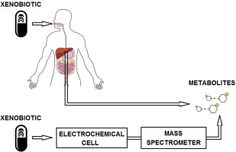 #ACA: Instrumentation and applications of electrochemistry coupled to mass spectrometry for studying xenobiotic metabolism: A… #MassSpec