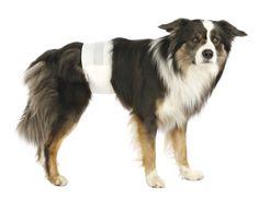 Hat Ihr Hund auch schon sein Geschäft Zu Hause verrichtet, obwohl er stubenrein ist? Ursachen, Tipps und Behebung des Problems erfahren Sie in diesem Beitrag.