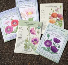 Just scattered my breadseed poppy seeds- it's 34F today in CT. #gardenchat #gardening @Natalie Sheets Interests @Renee Peterson Austring pic.twitter.com/7sxjgxhmp7