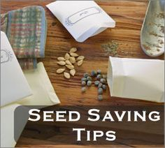 Seed saving tips.