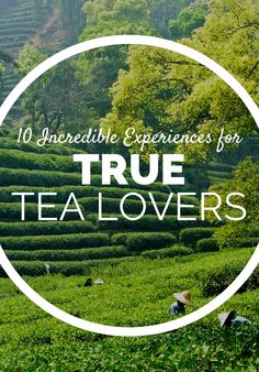 Top Tea Experiences Worth Traveling For New Travel, Travel Stuff, Places To Travel, Places To Visit, Cult Following, Sit Back And Relax, Teas, Tea Time, Letting Go
