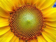 El Universo como fractal, un modelo del cosmos
