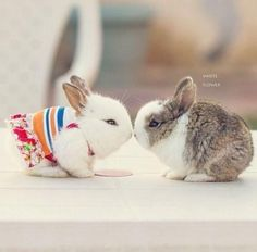 OMG!! Are they real, they're cute...... I wanna bunny now!! :)