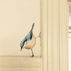 Bird - Home decoration - shabby chic Hand Painted Walls, Painted Wall Murals, Wall Decor, Wall Art, Bedroom Decor, Bird Art, Painted Furniture, Rustic Wood Furniture, Diy Home Decor