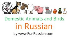 Russian Video Lesson: Domestic Animals and Birds in Russian