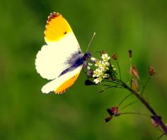 butterfly photography nature photography wildlife by Suzannasi