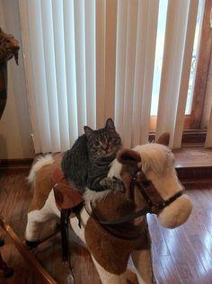 """No time to explain, get on the horse!""  Photo via Imgur"