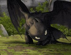 I love Toothless