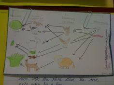 Food Web 4th grade