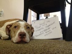 """""""I love to eat my Mom's expensive make-up.  Beautiful from the INSIDE."""" ~ Dog Shaming shame - Pit Bull Beauty secrets :)"""