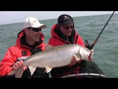 22 Best LAKE TROUT FISHING images in 2017 | Lake trout