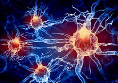 La estimulación eléctrica de un cierto tipo de neuronas de la sustancia negra modifica el proceso de aprendizaje