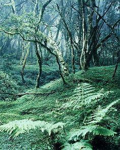 Ferns in Arusha National Park, Tanzania.