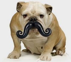 Humunga Stache Durable Dog Toy      Check this out>>>>>>>   http://amzn.to/1T37QnD