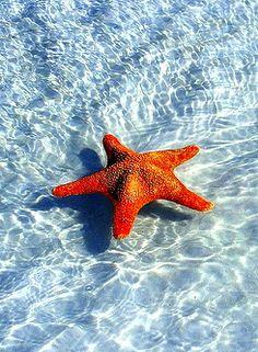 Sea Star - Tahiti <3
