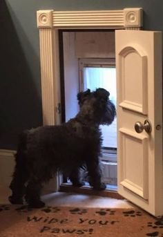 When puppies are expected I'll announce on my site. As an extra bonus, it's a lot simpler to teach a Schnauzer puppy not to bite, in place of an older Schnauzer Diy Pet, Niches, Dog Rooms, Kids Rooms, My Dream Home, Dog Owners, Dog Life, Pet Care, Animals And Pets