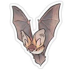 Animal Drawings Grey long-eared bat Sticker - Bats are cute! / Check out the other pictures in this series of European bats as well: / Greater mouse-eared bats / Greater mouse-eared bat / Three greater mouse-eared bats / Lesser horseshoe bat / Pipistrelle Tumblr Stickers, Canvas Prints, Art Prints, Animal Drawings, Cute Animals, Scrap, Artsy, Creatures, Softies