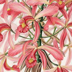 bibliodyssey.blogspot.com/2008/06/orchidaceae-of-mexico-a...