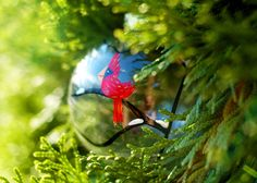Cardinal glass Chris