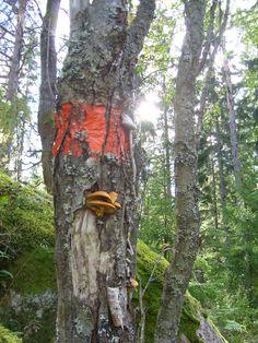 Mushrooms growing on trees. photo: Johanna Rehn