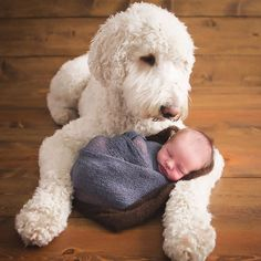 Hund und Neugeborenes Bild - Labradoodle und Baby - Babies and Animals - Nette Katze und Hund Welpen Newborn And Dog, Newborn Baby Photos, Baby Poses, Newborn Pictures, Newborn Session, Cute Babies Photography, Newborn Baby Photography, Newborn Photographer, Urban Photography