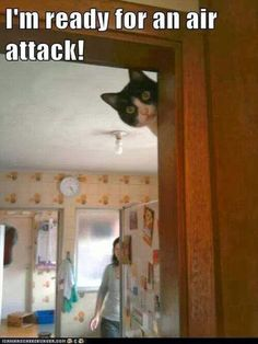 Attack Of The Funny Animals – 38 Pics Excuse the second one, but the others were just to funny to not pin...