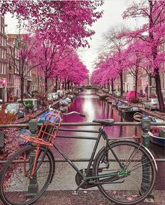 The more I look into this beautiful place, i fall in love with it. Amsterdam, Netherlands