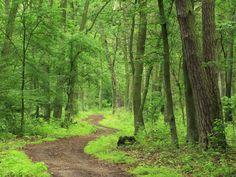 wilderness   Reflection: The voice in the wilderness   Lifestyle: InterAksyon.com