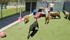 Annapolis Dog Obedience Training