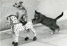 子犬と遊んであげる猫