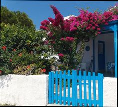 Bougainvillea in Agios Prokopios, Naxos, Greece
