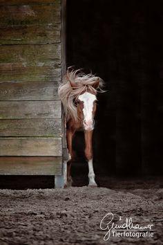 Rüttel dich und schüttle dich! Ja, der Frühling ist da es heißt den Staub abklopfen und los geht es. Ich freue mich schon auf ganz viele neue Shootings und dich und dein Pferd kennenzulernen. #Pferde #Pferdeshooting Horse Pictures, Community, Horses, In This Moment, Group, Board, Animals, Inspiration, Beautiful