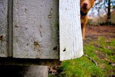 """photoblog.notsolinear.net: """"Weathered""""    We're all feeling weathered."""