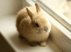 How much is that bunny in the window? The one with the wiggly nose?