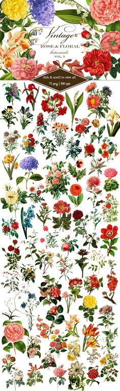 Vintage Rose & Floral Botanicals 3 by Eclectic Anthology on Creative Market